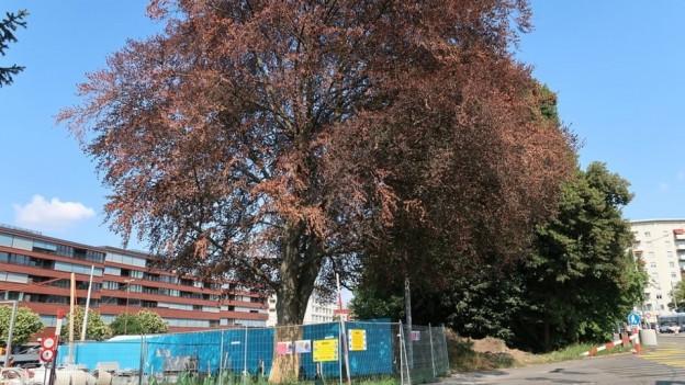 Ein grosser Baum.