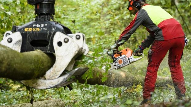 Ein Forstwart zersägt einen Baumstamm.