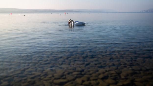 Trügerische Ruhe: Der friedliche Bodensee kann auch zur tödlichen Gefahr werden.