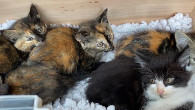 Kleine Katzen in einer Kiste.