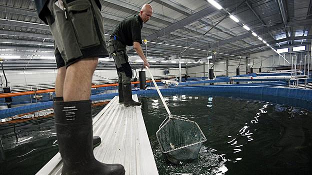Im Fischereizentrum werden Fische gezüchtet, um die Arten im Bodensee zu erhalten.