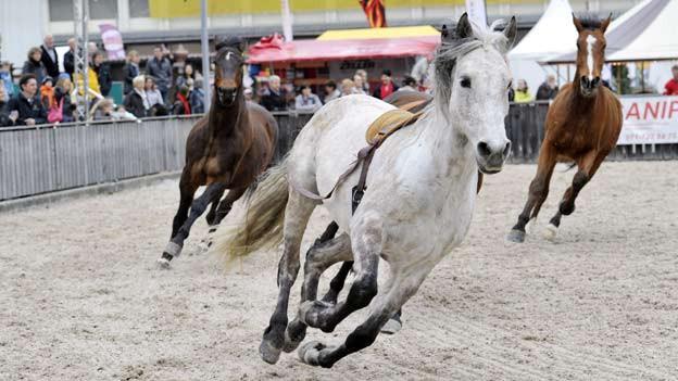 Pferde sind Höhepunkte an der Offa