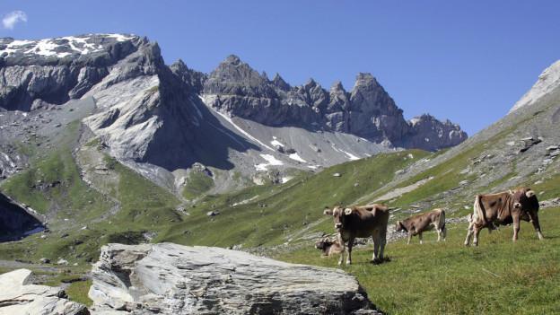 Vor fünf Jahren wurde die Tektonikarena Sardona zum Unesco Weltnaturerbe ernannt. Seither kommen Touristen aus der ganzen Welt. Die Welterben in der Schweiz im Überblick.