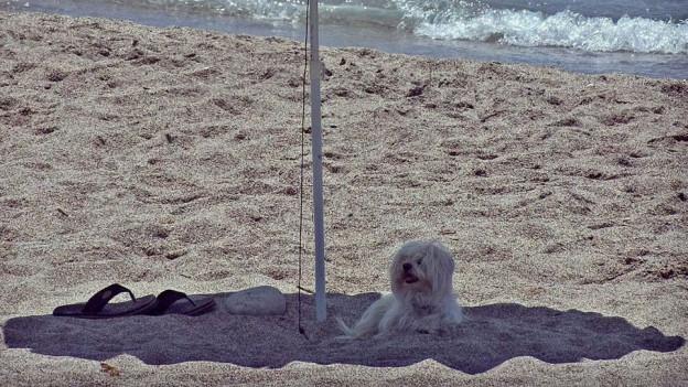 Die Chip-Pflicht führte dazu, dass weniger Hunde ausgesetzt werden.