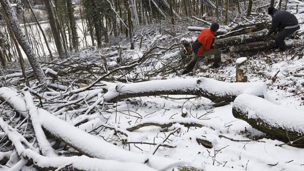 Wegen des milden Winters konnte weniger Holz geerntet werden.