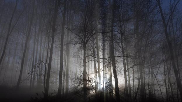 Waldbestattungen im Thurgau sind umstritten