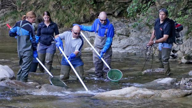 Menschen stehen mit Fangnetz im Fluss