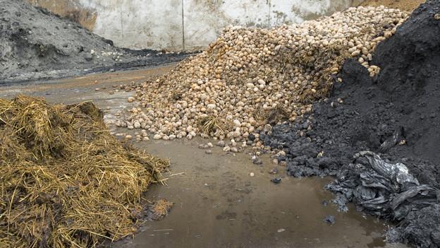 In einer Kompogas-Anlage werden pflanzliche Abfälle, Gülle und Lebensmittelreste zu Energie verarbeitet.