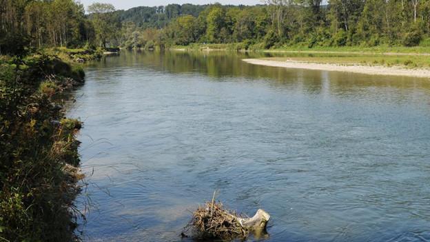 Hochwasserschutz: Die Thur hat bei Flaach mehr Platz bekommen.