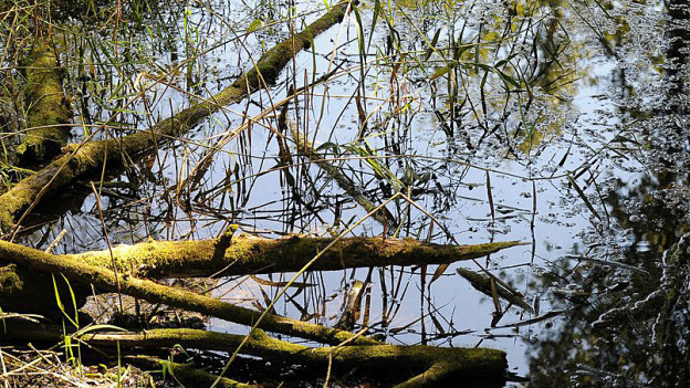 Wenn Flüsse renaturiert werden, wird mehr Land für die Gewässer verbraucht.
