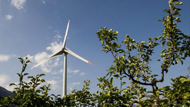 Windräder und Obstbäume passen zusammen, findet die Thurgauer Regierung.