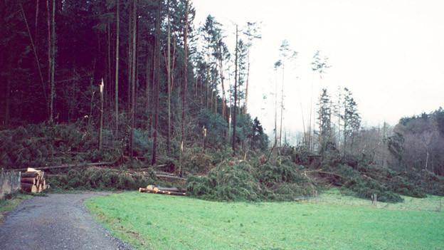 Lothar fegte ganze Wälder weg.