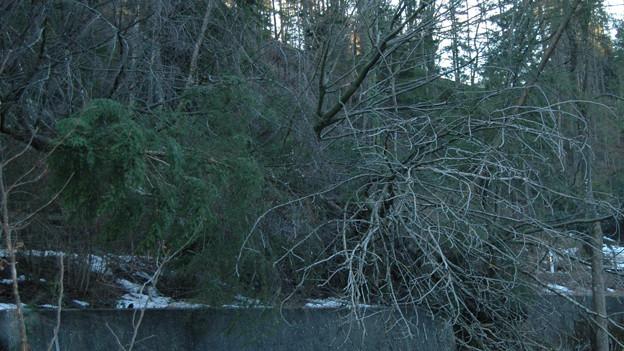 Ein Hang bei Trogen (AR) kam ins Rutschen.