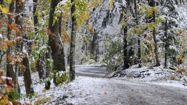Die Glarner Politik will nicht mehr Verkehr im Wald.