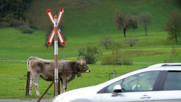 Eine Kuh steht auf einer Weide bei einem Gleis.
