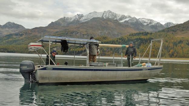 Fischfang mit normierten Netzen auf dem Silsersee.