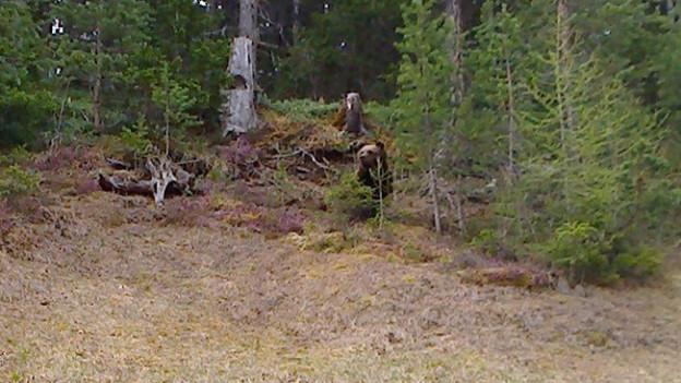 Bär im Puschlav ist wohl nicht M25 wie hier auf dem Bild.