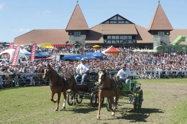 Pferde Marche Concour