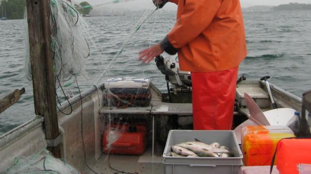 Bodensee-Fischerei