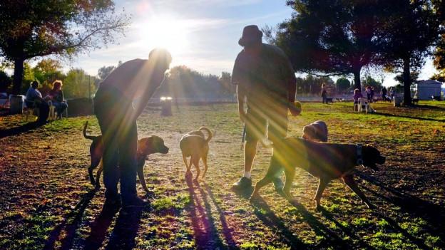 St. Gallen will eine kantonale Hundesteuer einführen.