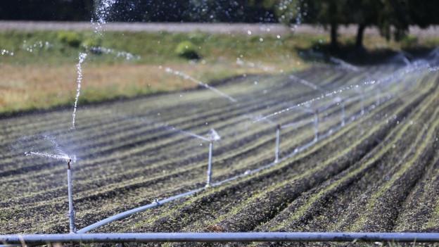 Wenig Wasser, grosse Hitze: Landwirte blicken auf einen guten Sommer zurück.