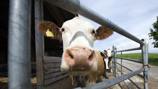 Die Gemeinden sollen künftig bei Verstösse gegen das Tierschutzgesetz miteinbezogen werden. Symbolbild