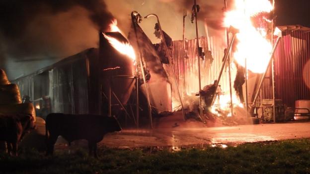 Ein Brand zerstört einen Mastbetrieb in Kriessern (SG).