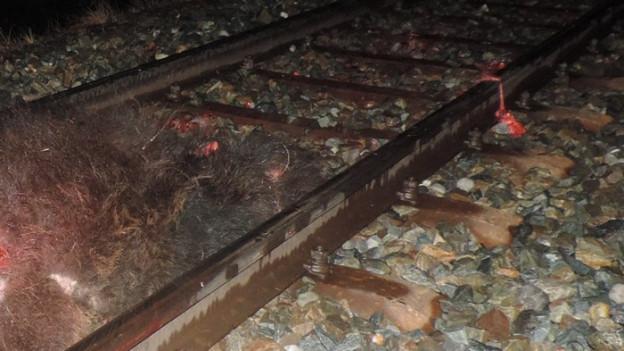 Der Bär wanderte auf dem Bahngleis und wurde von einem Zug überfahren.