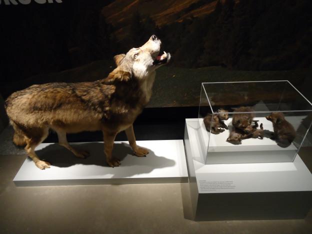 Der Park des neuen Naturmuseums St. Gallen darf gebraucht werden