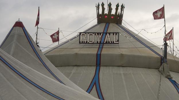 Löwennummer in der Kritik: Strafanzeige gegen Circus Royal.