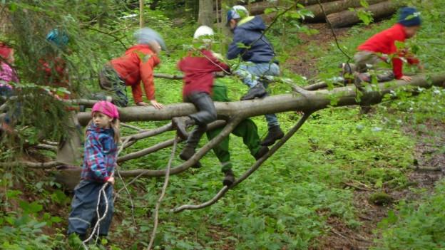 Kinder klettern im Wald auf einem umgestürzten Baum.