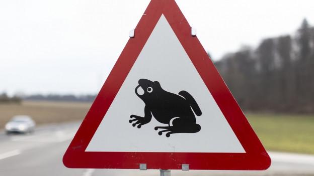 Kröten und Kinder sollen in Wartau aus Sicherheitsgründen nicht mehr über die Strasse laufen.