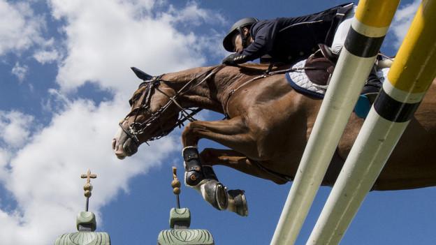 Pferd und Reiter springen über Hürde