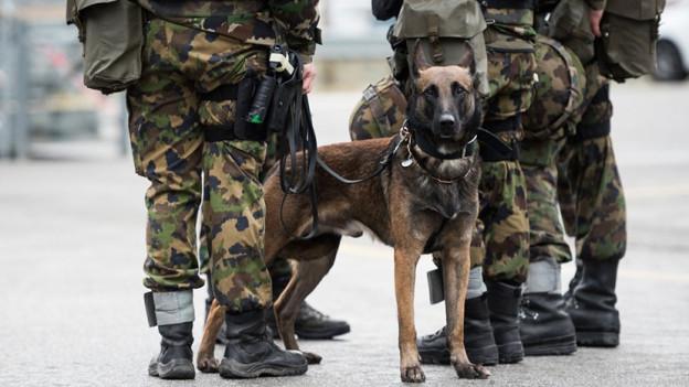 Am Donnerstag fand am CSIO eine Militärhundevorführung statt.