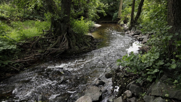 Thurgauer Bäche führen wenig Wasser