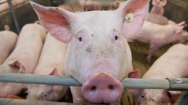 Ist der Bauer überfordert, leidet oft auch das Tier.