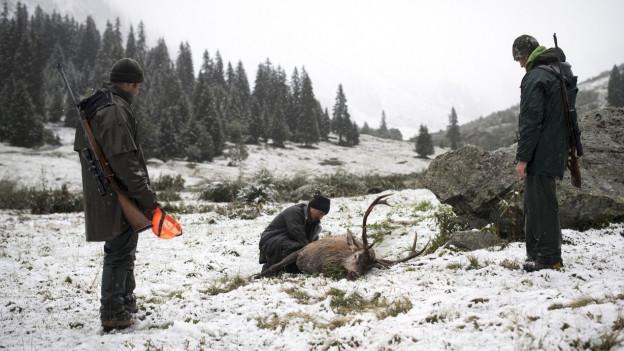 Wegen der kühlen Temperaturen sind die Hirsche früh in tiefere Lagen gekommen.