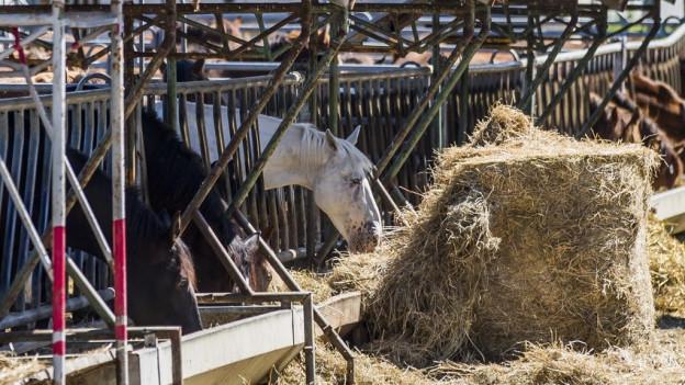 Thurgauer Pferdezüchter muss Prozesskosten selbst bezahlen