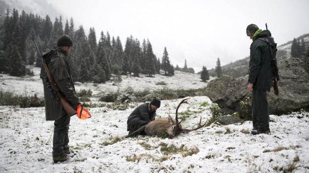 36 Hirsche im Jagdbanngebiet erlegt