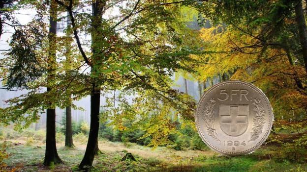 Der Kanton Thurgau will über eine neue Einnahmequelle für die Waldbesitzer nachdenken