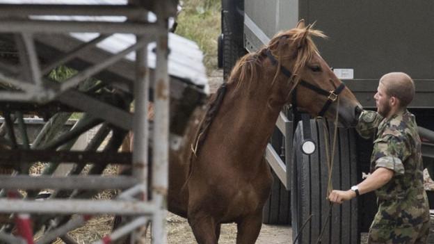 Pferdeverkauf