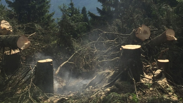 Abgeschnittene Bäume