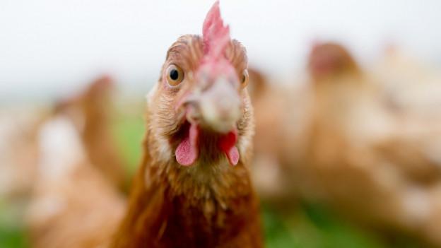 Unter anderem wurden Hühner vom Hof abtransportiert.