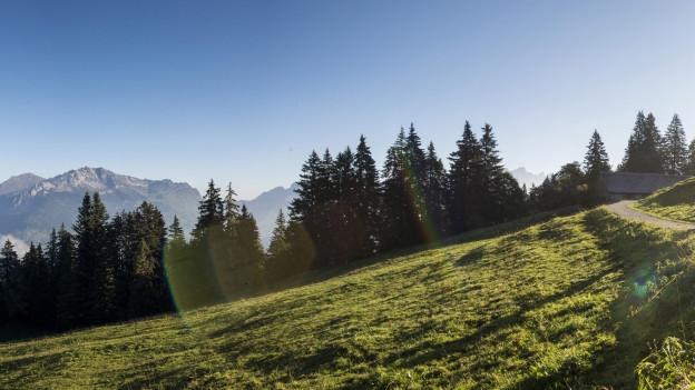 Die Mittlere Nüenalp in Glarus Nord