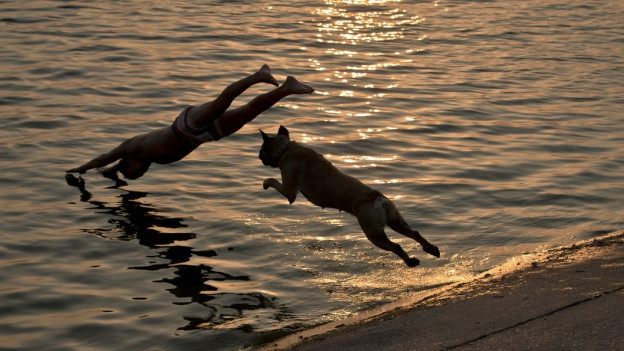 Badespass vielleicht schon bald auch für Romanshorner Hunde.