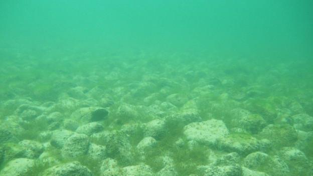 Steinhügel Bodensee
