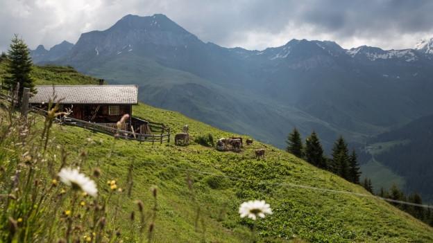 Eine Alp in St. Antönien im Kanton Graubünden.