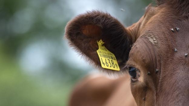 Angeschnittenes Bild von einem Kuh-Kopf.