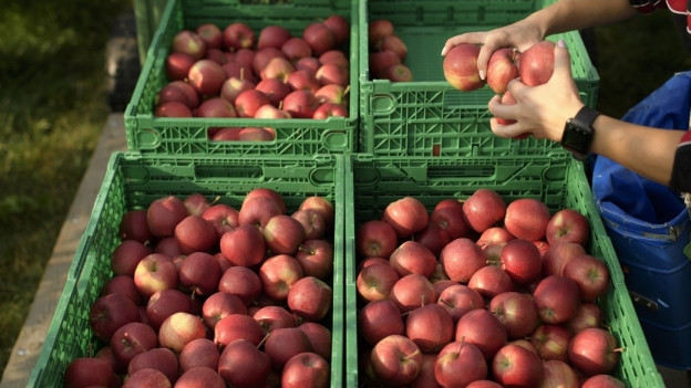 Kisten mit Tafeläpfeln drin