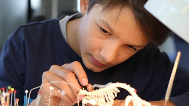 Junge arbeitet konzentriert an einem Tierskelett.